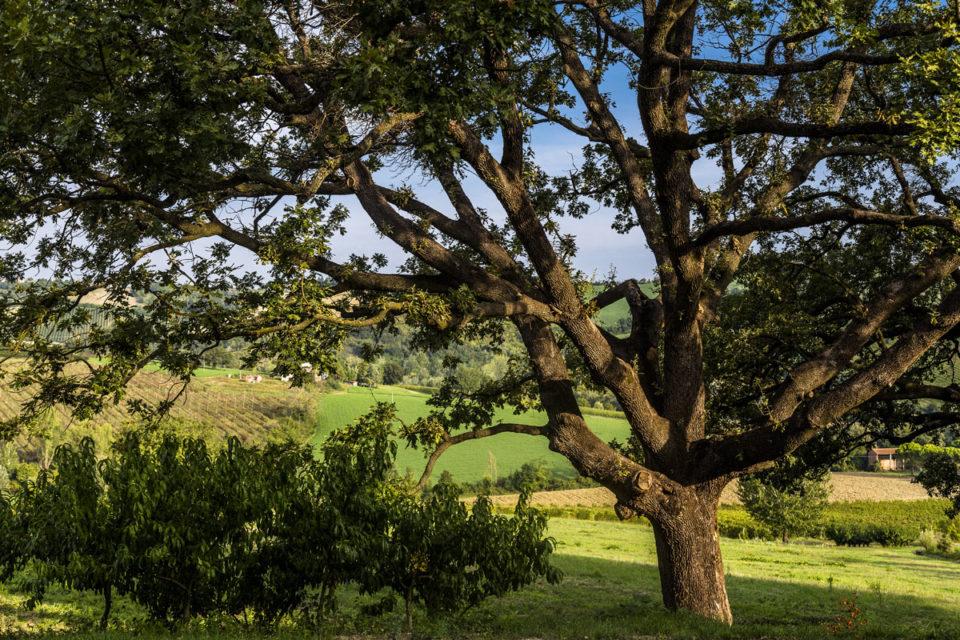 servizio fotografico vini la quercia di lotta vecchia - area web imola